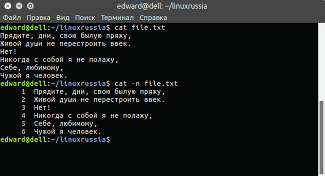 terminal_linux_17_1-20219-bc46ed.png